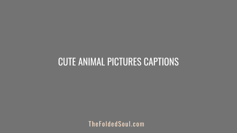 Cute Animal Pictures Captions Featured Image